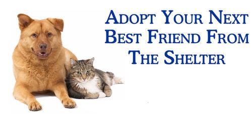 Adopt-your-next-best-friend-against-animal-cruelty-15053705-500-227